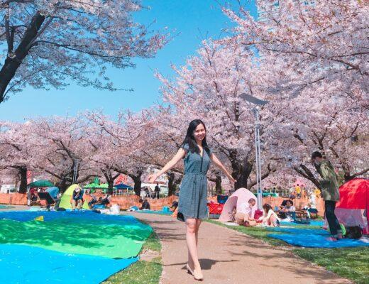 5 địa điểm ngắm hoa anh đào không thể bỏ lỡ khi đến Tokyo Nhật Bản!